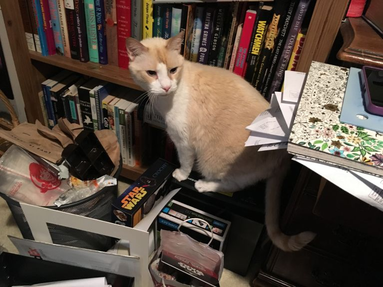 Missing a leg doesn't stop him from balancing on the paper shredder to try to reach my desk!